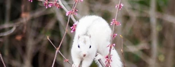 April White Squirrel By Rick Jensen
